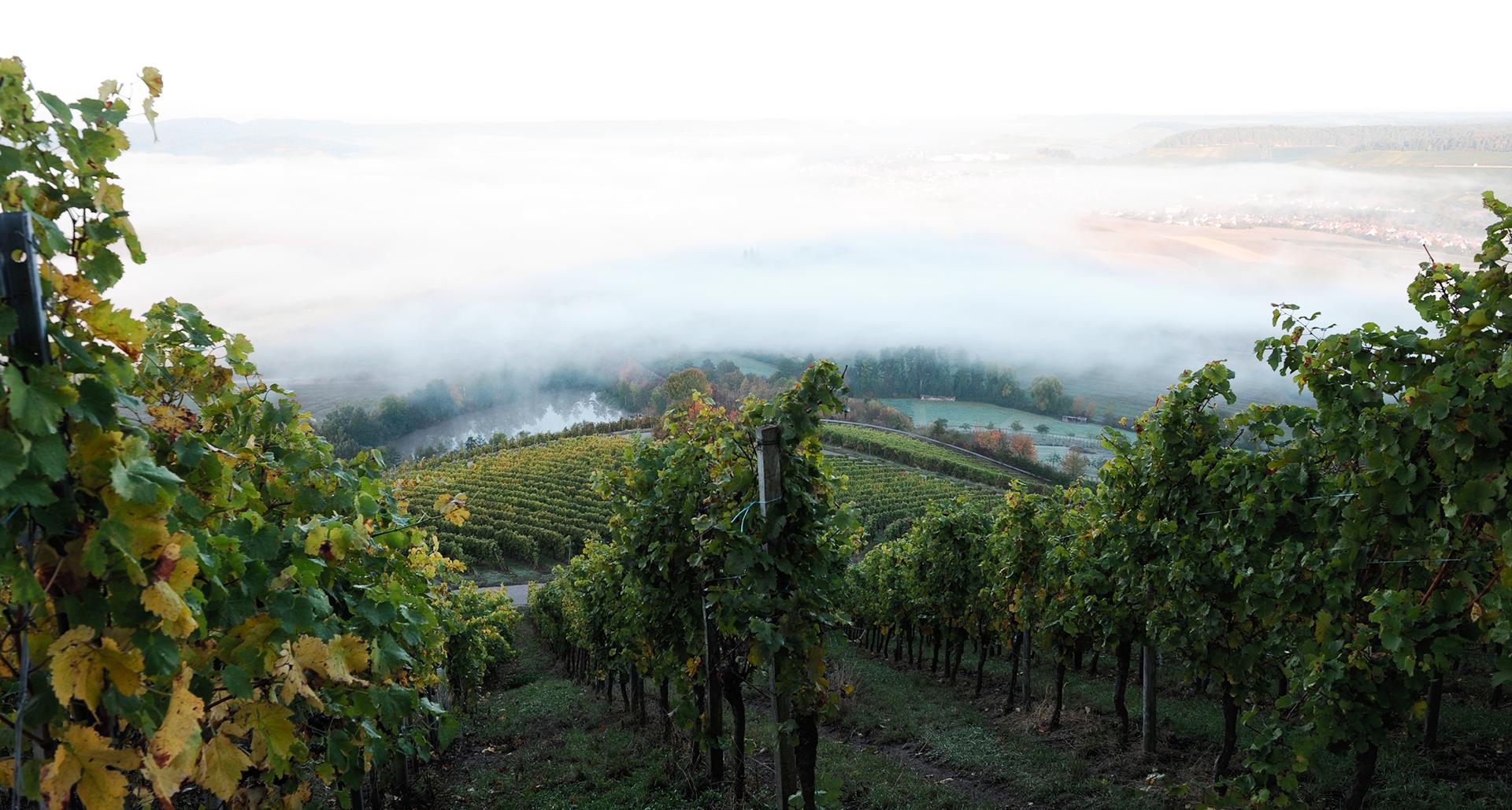 Blick ins Weinsberger Tal. Foto ©Martin Schmidt Photography